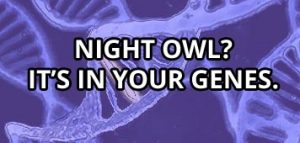 night owl gene